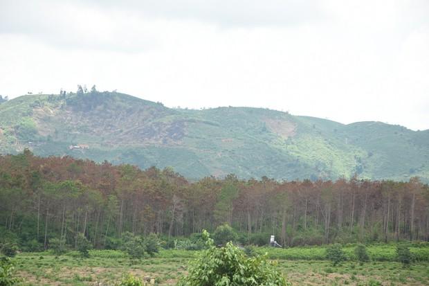 Khởi tố vụ án phá hơn 10 ha rừng thông tại Lâm Đồng - Ảnh 1.