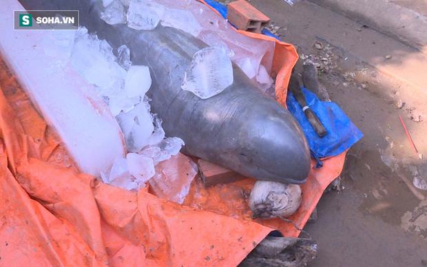 Ngư dân đòi 40 triệu mới chịu giao xác cá heo nước ngọt có nguy cơ tuyệt chủng - Ảnh 2.
