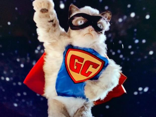 Grumpy Cat - cô mèo cáu kỉnh nhất thế giới với hơn 8 triệu người theo dõi đã qua đời - Ảnh 5.