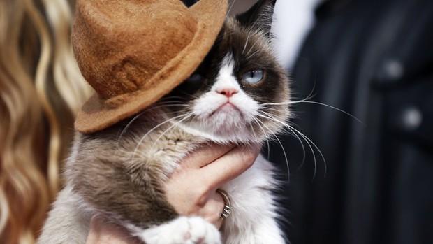 Grumpy Cat - cô mèo cáu kỉnh nhất thế giới với hơn 8 triệu người theo dõi đã qua đời - Ảnh 4.