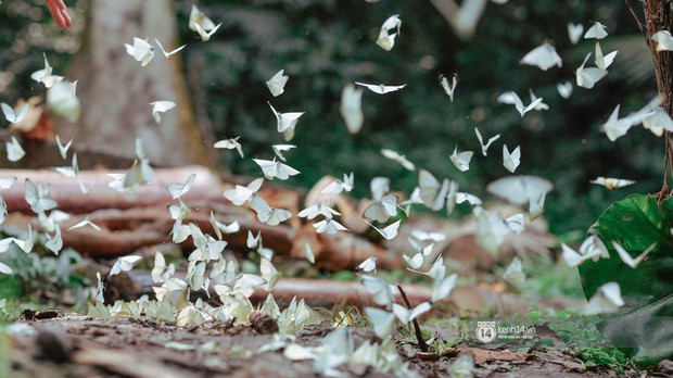 Chuyến đi Cúc Phương những ngày cuối mùa bướm rừng: Chốn thần tiên có vẻ đẹp riêng của sự muộn màng - Ảnh 7.