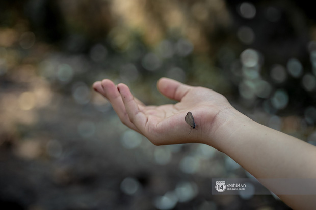 Chuyến đi Cúc Phương những ngày cuối mùa bướm rừng: Chốn thần tiên có vẻ đẹp riêng của sự muộn màng - Ảnh 14.
