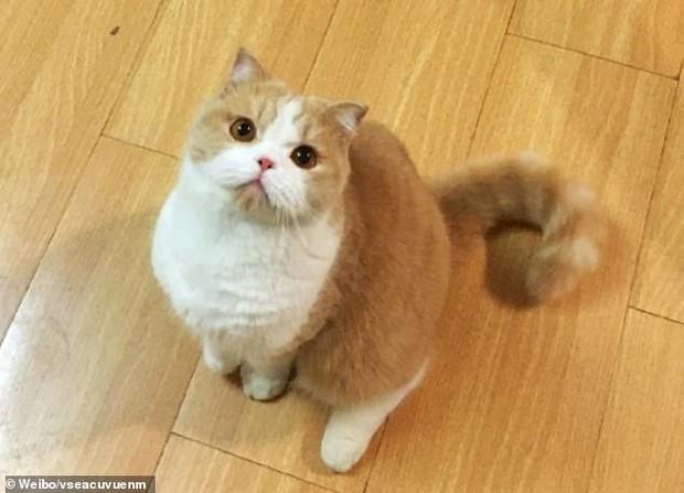 Nhờ bạn cùng phòng chăm giúp mèo cưng khi đi du lịch, cô gái xem CCTV mới phát hiện nó bị hành dạ dã man - Ảnh 1.