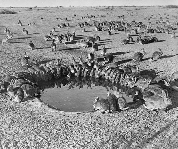 10 loài sinh vật du nhập nhỏ nhưng có võ từng tàn phá hệ sinh thái các nước, gây hại cho con người và tổn thất về kinh tế - Ảnh 9.