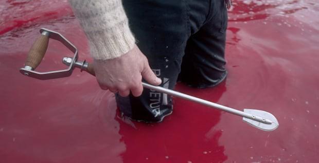 Sự thật tàn khốc đằng sau vùng biển cứ đến tháng 8 hàng năm lại chuyển sang màu đỏ tươi rùng rợn như phim kinh dị - Ảnh 3.