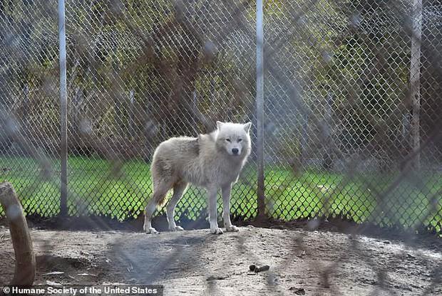 Giải cứu thú quý hiếm trong sở thú tồi tàn ven đường: hơn 100 cá thể bị bạc đãi, bỏ đói... khiến nhiều người phẫn nộ - Ảnh 4.