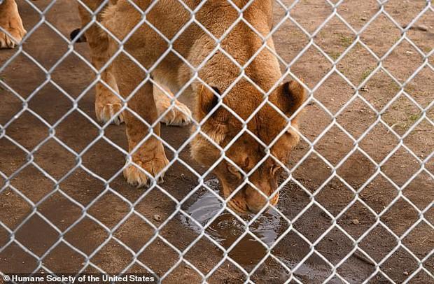 Giải cứu thú quý hiếm trong sở thú tồi tàn ven đường: hơn 100 cá thể bị bạc đãi, bỏ đói... khiến nhiều người phẫn nộ - Ảnh 5.