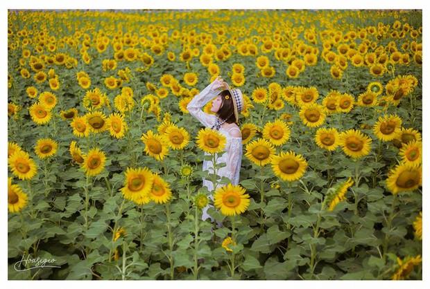 Hốt hoảng trước cảnh tượng hoang tàn của vườn hướng dương hot nhất Sài Gòn: Hoa héo úa, rác ngập tràn khắp nơi! - Ảnh 6.