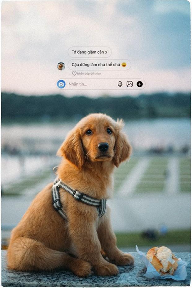 Ngắm bộ ảnh trai đẹp du lịch cùng cún cưng này mới thấy: Đi Đà Lạt với người yêu hay bạn thân là xưa rồi! - Ảnh 22.