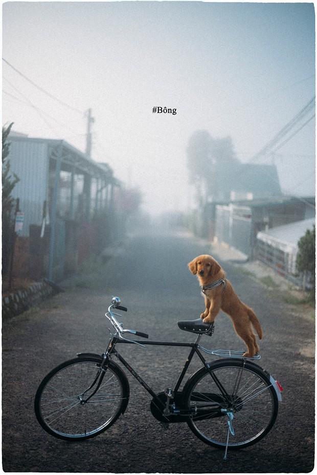 Ngắm bộ ảnh trai đẹp du lịch cùng cún cưng này mới thấy: Đi Đà Lạt với người yêu hay bạn thân là xưa rồi! - Ảnh 10.