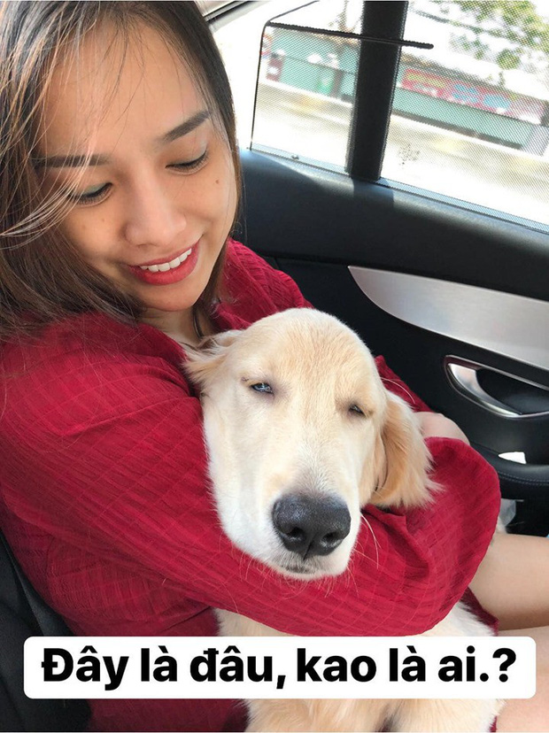 Chú chó đốn tim cư dân mạng bởi loạt biểu cảm nói hộ nỗi lòng của những người... say xe khi đi du lịch  - Ảnh 23.