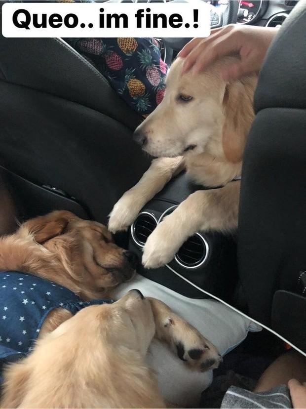 Chú chó đốn tim cư dân mạng bởi loạt biểu cảm nói hộ nỗi lòng của những người... say xe khi đi du lịch  - Ảnh 25.