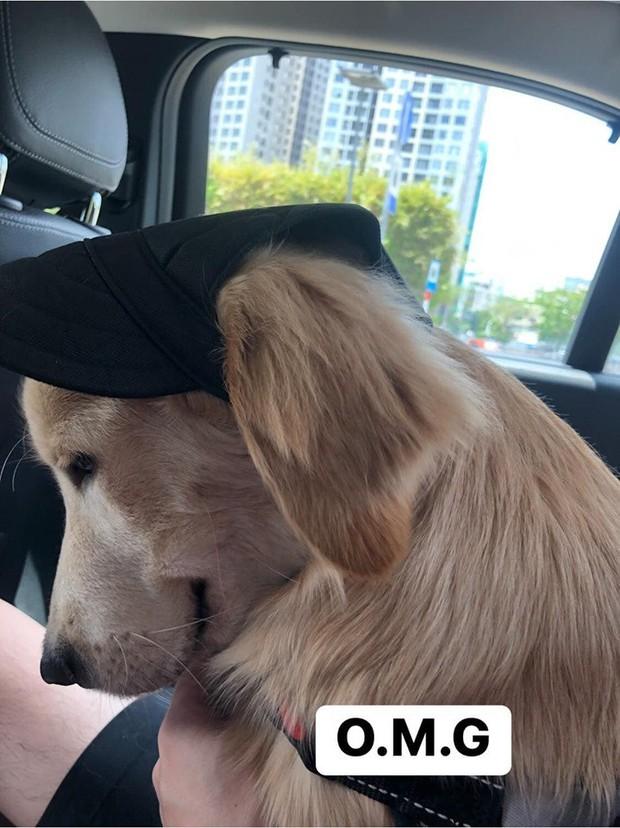 Chú chó đốn tim cư dân mạng bởi loạt biểu cảm nói hộ nỗi lòng của những người... say xe khi đi du lịch  - Ảnh 3.