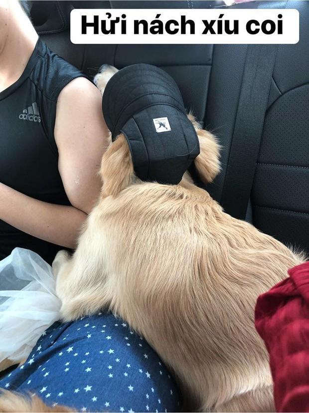 Chú chó đốn tim cư dân mạng bởi loạt biểu cảm nói hộ nỗi lòng của những người... say xe khi đi du lịch  - Ảnh 21.
