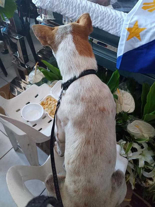 Rơi nước mắt với chú chó khóc nấc trước quan tài của giáo sư - Ảnh 2.