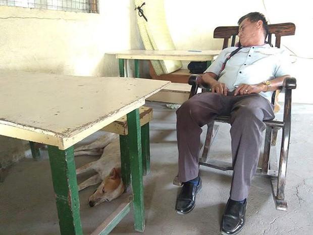 Rơi nước mắt với chú chó khóc nấc trước quan tài của giáo sư - Ảnh 3.