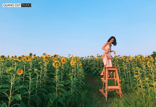 """Lướt mỏi tay loạt ảnh check-in """"thật là vàng tươi"""" của giới trẻ ở vườn hoa hướng dương mới xuất hiện ngay gần Hà Nội, không đi nhanh kẻo phí cả mùa hè - Ảnh 6."""