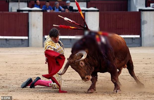 Đấu sĩ Tây Ban Nha bị bò tót húc thủng mông và phản ứng đầy bất ngờ của dân mạng - Ảnh 2.