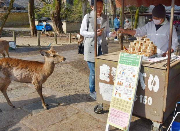Từ năm ngoái đến nay, 6 con hươu Nara đã chết vì bội thực rác nhựa của du khách - Ảnh 4.