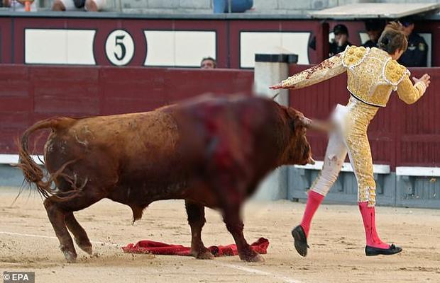 Đấu sĩ Tây Ban Nha bị bò tót húc thủng mông và phản ứng đầy bất ngờ của dân mạng - Ảnh 1.
