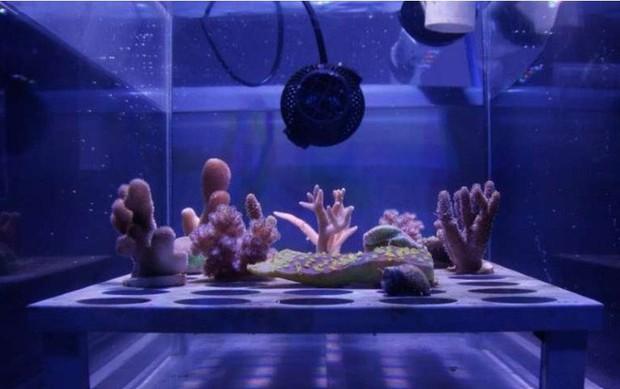 """10 sáng chế đỉnh cao đang góp phần """"cứu rỗi"""" đại dương, cái số 3 được tạo ra bởi một cô bé mới học lớp 6! - Ảnh 7."""