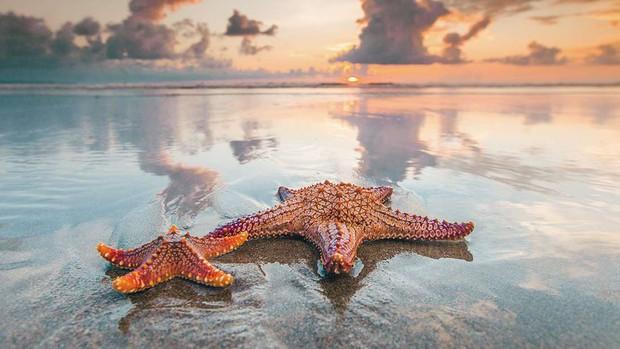 Sự thật về con sao biển uốn éo đã khiến cư dân mạng thế giới phát cuồng vài ngày qua - Ảnh 4.