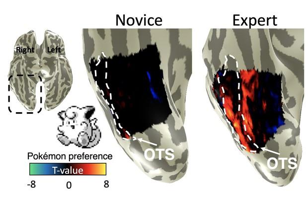 Khoa học rảnh thực sự: Chuyên gia Stanford tìm ra phần não bộ lưu giữ kỹ năng... chơi Pokémon của chúng ta - Ảnh 3.