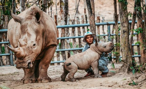 Ngắm những cặp mẹ con thú hoang dã đáng yêu ở Vinpearl Safari Phú Quốc - Ảnh 19.