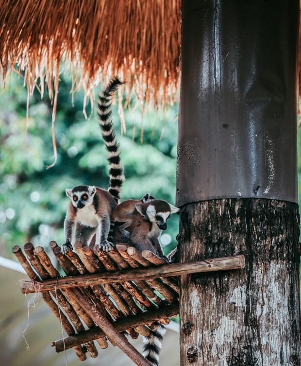 Ngắm những cặp mẹ con thú hoang dã đáng yêu ở Vinpearl Safari Phú Quốc - Ảnh 12.