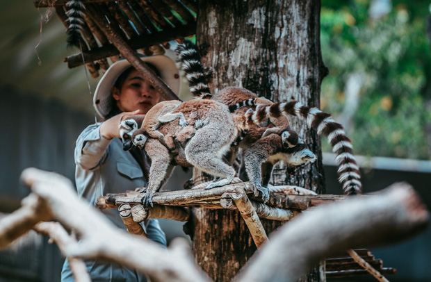 Ngắm những cặp mẹ con thú hoang dã đáng yêu ở Vinpearl Safari Phú Quốc - Ảnh 10.