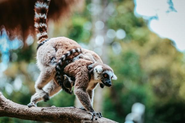 Ngắm những cặp mẹ con thú hoang dã đáng yêu ở Vinpearl Safari Phú Quốc - Ảnh 14.