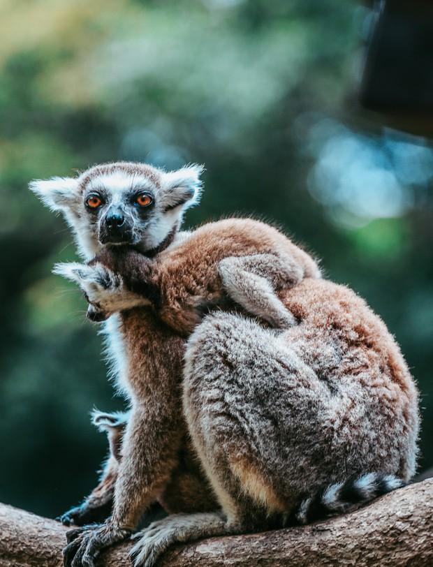 Ngắm những cặp mẹ con thú hoang dã đáng yêu ở Vinpearl Safari Phú Quốc - Ảnh 11.