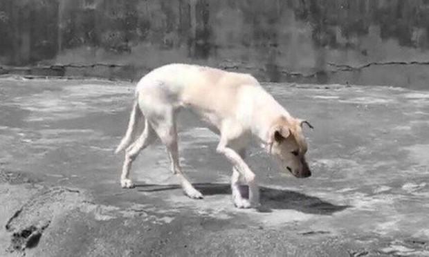 Du khách tức giận khi chỉ thấy độc một con chó nhà trong chuồng sói tại sở thú Trung Quốc - Ảnh 2.