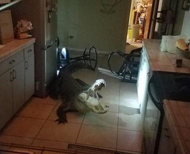 Cá sấu dài hơn 3m phá cửa sổ lẻn vào nhà trong đêm khiến người dân khiếp vía - Ảnh 1.