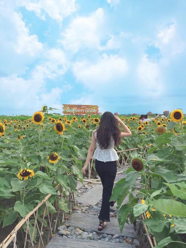 """Trời 38 độ hí hửng lên vườn hướng dương chụp hình thơ mộng, cô nàng bị cư dân mạng chế ảnh đi muôn nơi: """"Nắng thế này hoa héo hết rồi, chị hiểu hông?"""" - Ảnh 8."""