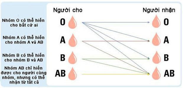Vi khuẩn trong ruột người có thể biến máu nhóm A thành nhóm O: Tại sao đây là một đột phá quan trọng? - Ảnh 3.