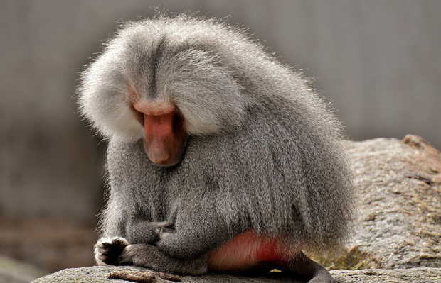 8 loài vật có ngoại hình tưởng sai trái nhưng thực ra lại là cục vàng trong làng tiến hóa - Ảnh 7.