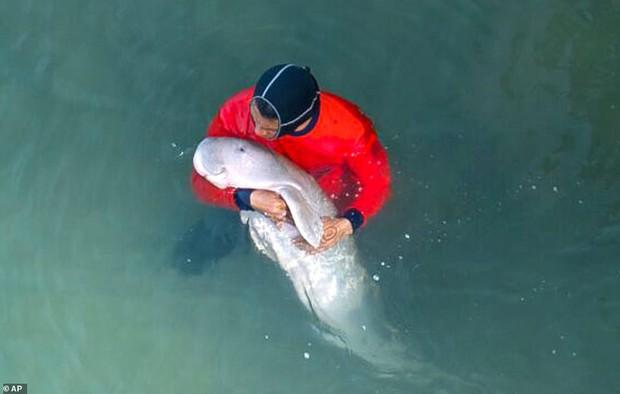 Dân mạng phát sốt với cá nàng tiên lạc mẹ rồi được các bác sĩ thú y chăm sóc, giờ đã quyến luyến không rời - Ảnh 1.