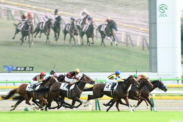 Dùng chất kích thích, 156 con ngựa bị cấm đua - Ảnh 1.