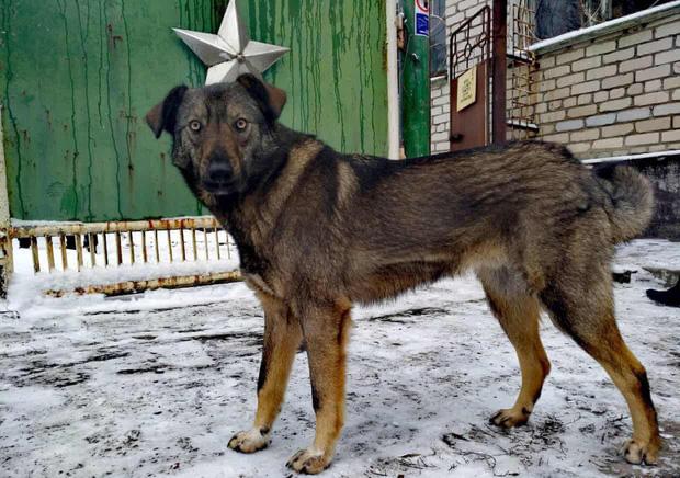 Câu chuyện về những chú chó bị bỏ rơi ở Chernobyl: Cô độc giữa mảnh đất chết, vươn lên thành băng đảng chó hoang lớn mạnh nhất vùng - Ảnh 2.