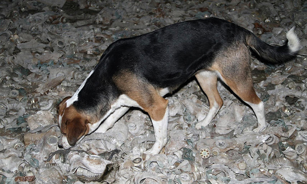Câu chuyện về những chú chó bị bỏ rơi ở Chernobyl: Cô độc giữa mảnh đất chết, vươn lên thành băng đảng chó hoang lớn mạnh nhất vùng - Ảnh 3.