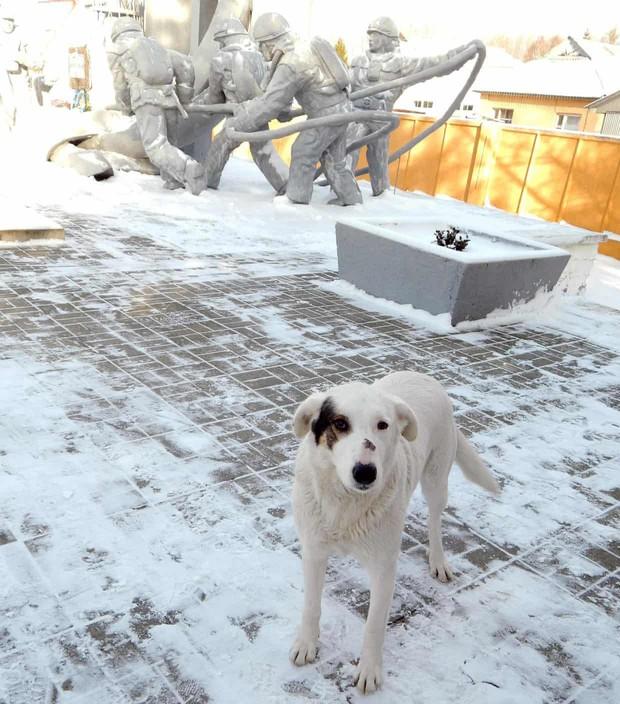 Câu chuyện về những chú chó bị bỏ rơi ở Chernobyl: Cô độc giữa mảnh đất chết, vươn lên thành băng đảng chó hoang lớn mạnh nhất vùng - Ảnh 4.