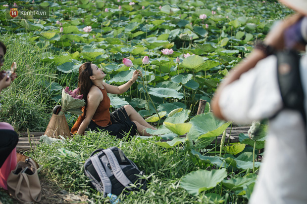 Đầm sen ở Nhật Tân có gì hot mà người dân Hà Nội ùn ùn kéo đến, lội xuống hồ chụp ảnh mỗi ngày? - Ảnh 8.