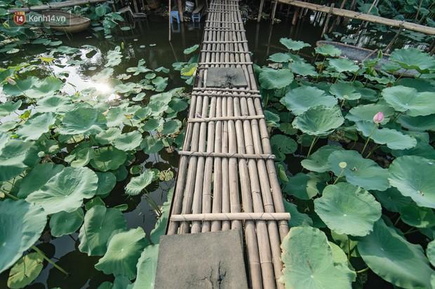 Đầm sen ở Nhật Tân có gì hot mà người dân Hà Nội ùn ùn kéo đến, lội xuống hồ chụp ảnh mỗi ngày? - Ảnh 4.