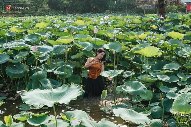 Đầm sen ở Nhật Tân có gì hot mà người dân Hà Nội ùn ùn kéo đến, lội xuống hồ chụp ảnh mỗi ngày? - Ảnh 15.
