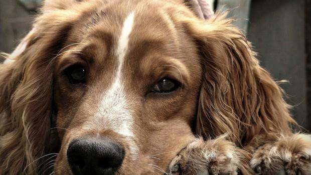 Bạn có biết vì sao mình yêu chó không? Vì chúng cố tình khiến bạn cảm thấy như vậy đó - Ảnh 1.