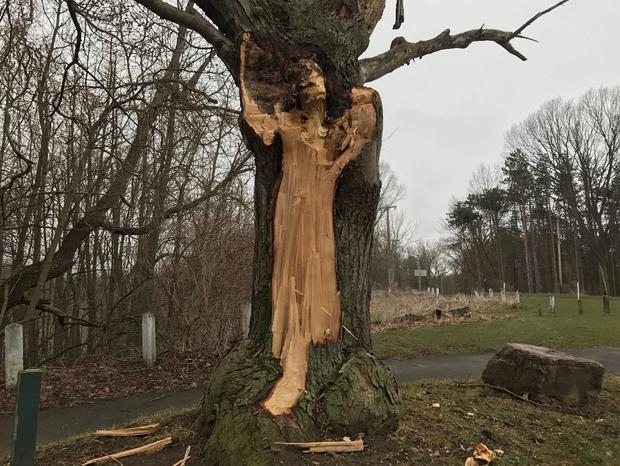 Hình dáng người phụ nữ trên thân cây và câu chuyện về người vợ bị bội phản, người mẹ dành cả đời đi tìm con gái ám ảnh công viên nước Mỹ - Ảnh 4.