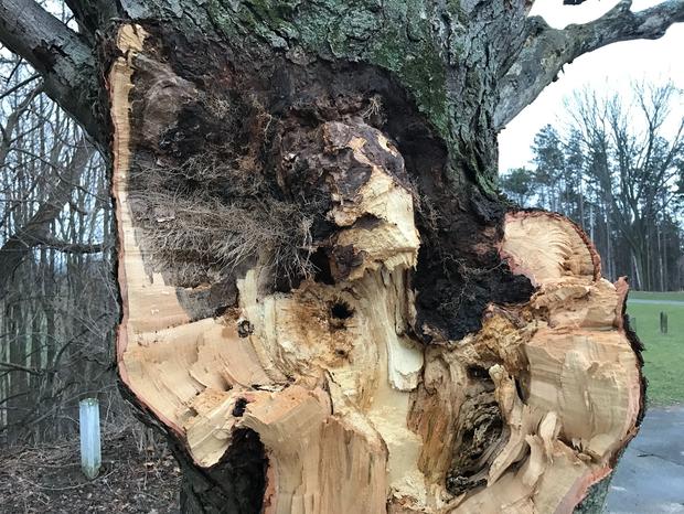 Hình dáng người phụ nữ trên thân cây và câu chuyện về người vợ bị bội phản, người mẹ dành cả đời đi tìm con gái ám ảnh công viên nước Mỹ - Ảnh 5.