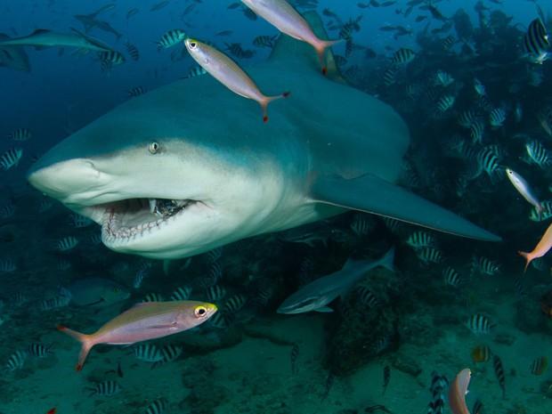 Ngày càng có nhiều người bị cá mập tấn công hơn và đây là lý do thực sự đằng sau - Ảnh 1.