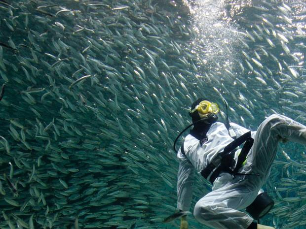 Ngày càng có nhiều người bị cá mập tấn công hơn và đây là lý do thực sự đằng sau - Ảnh 5.